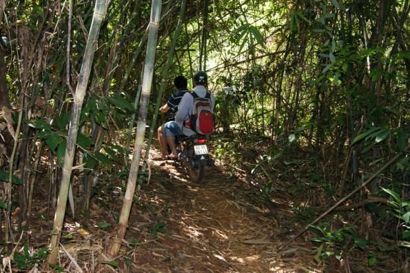 Xuyên rừng tre trúc